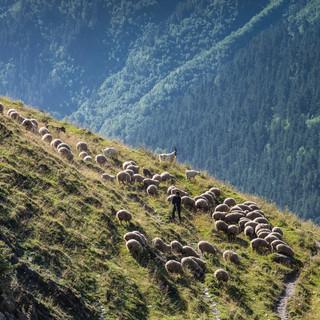 Пастух с овцами на горном склоне  A shepherd and his sheep on a mountain slope