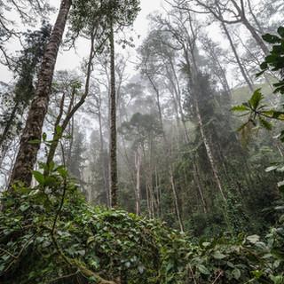Облачный лес в долине Кокора на высоте окло 2800 метров Cloudforest of Cocora valley at about 2800 m.a.s.l.