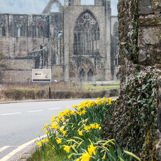 Монастырь Тинтерн и придорожные нарциссы Tintern Abbey and daffodils