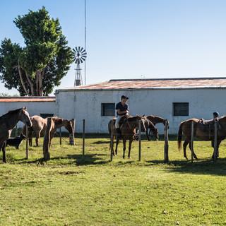 Гаучо перед началом рабочего дня. Кроме туризма, ферма Ла-Пас известна большим стадом племенных коров, неоднократно выигрывавших главные призы на уругвайских сельскохозяйственных выставках.  Gauchos at the beginning of a working day. Besides tourism, Estancia La Paz is known for its vast herd of pedigree cattle that won many medals in Uruguayan agriculture contests