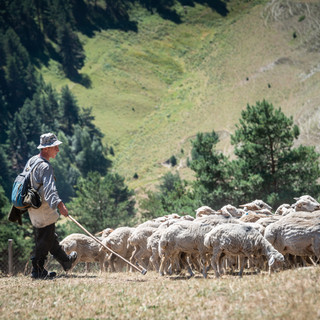 Пастух в горах  Shepherd in the mountains