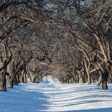 Под снежным одеялом, февраль Covered with snow, February