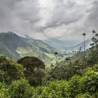 Долина Кокора, вид сверху Cocora Valley seen from above