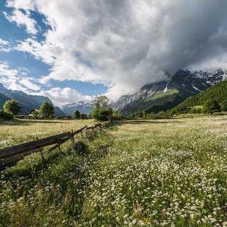 Ромашки в долине и гора Ушба в облачной шапке Camomiles and Ushba mountain with a cap of clouds