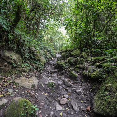 В облачном лесу в долине Кокора In cloudforest of Cocora valley