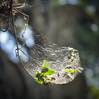 Паутинка в лесу  A spiderweb in a forest