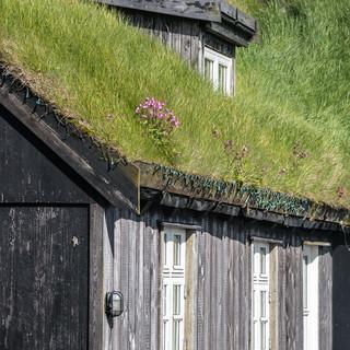 Цветы на традиционно покрытых дерном крышах, деревня Мичинес Flowers bloom on traditional turf roofs in Mykines village
