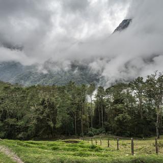 Долина Кокора Cocora Valley