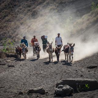 В горных районах Кабо-Верде ослы – основное и самое удобное транспортное средство. Склоны горы Топе-де-Короа, остров Санту-Антау  In mountaneous areas of Cape Verde, donkeys are the main and the most convenient transportation means. Slopes of Tope de Coroa mountain, Santo Antão island