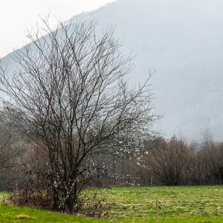 Весеннее пробуждение природы Nature awakening in spring