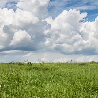 Травы и облака Grass-and-sky-scape
