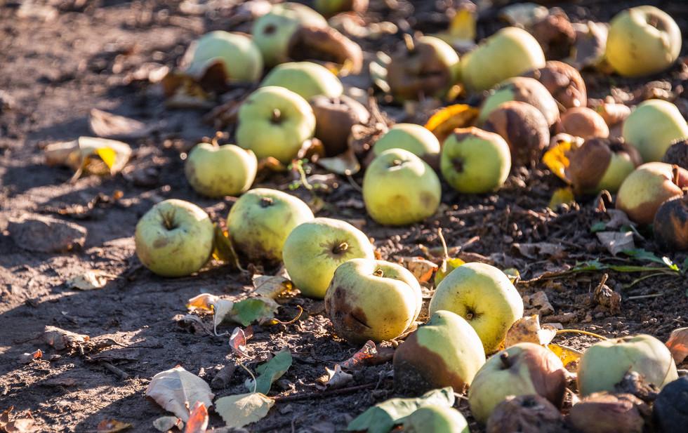 Последние дни урожая, начало октября Late harvest, early October