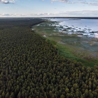 Вологодские просторы: Вещозеро и бесконечный лес  Vologda region's expanses: Veshchozero lake and the endless forest