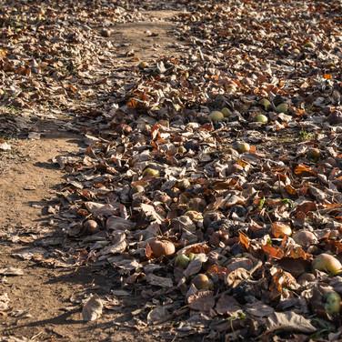Листва опадает, ноябрь Losing leavis, November