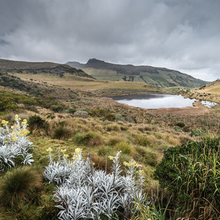 Озеро Лагуна-Негра недалеко от вулкана Невадо-дель-Руис, 3760 метров над уровнем моря Small lake of Laguna Negra near Nevado del Ruiz volcano, 3760 m.a.s.l.