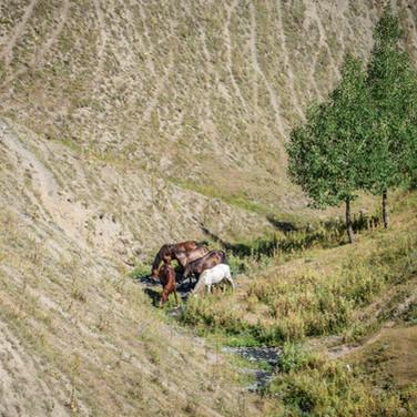 Лошади на водопое  Horses at a watering place