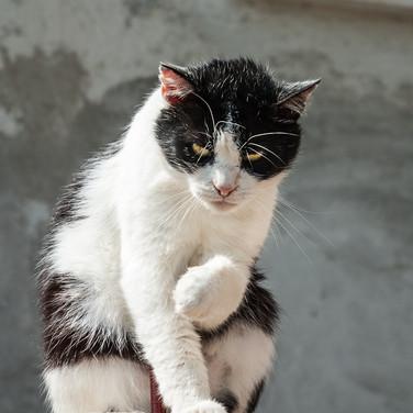 Кот, Тиндари A cat, Tindari