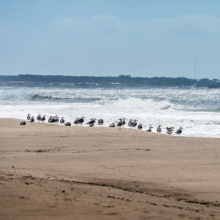 Чайки на песчаном берегу океана  Seagulls rest ashore as ocean surf hits a beach