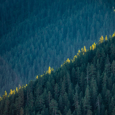 Полоска солнечного света на горном склоне  Ray of sunlight falls onto a wooded mountain slope