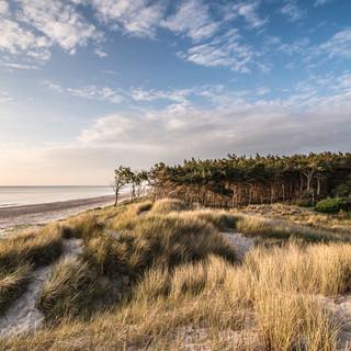 Дюны и сосны пляжа Вестштранд, национальный парк Переднепомеранские лагуны Dunes and pines of Weststrand beach, Vorpommersche Boddenlandschaft national park