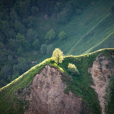 Дерево на склоне в лучах вечернего солнца Tree on a slope lit by the setting sun
