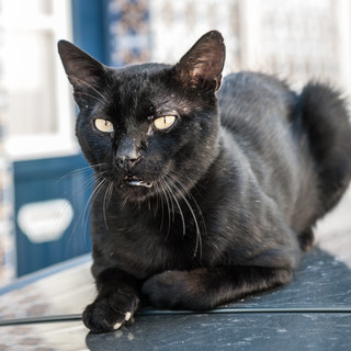 Черная кошка на крыше машины A black cat on a car's roof