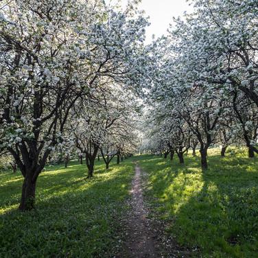 Цветение в мае Spring bloom in May