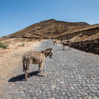 На дороге, остров Санту-Антау. Большая часть дорог на Кабо-Верде имеет традиционное португальское каменное мощение  On a road, Santo Antão island. Most Cape Verdean roads still have traditional Portuguese cobbling