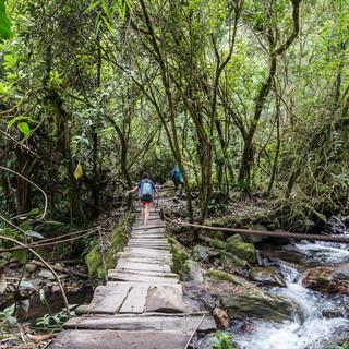 Переправа через реку Киндио, облачный лес долины Кокора Crossing Quindío river, cloudforest of Cocora Valley