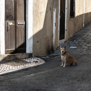 На улицах Альфамы In the streets of Alfama neighbourhood