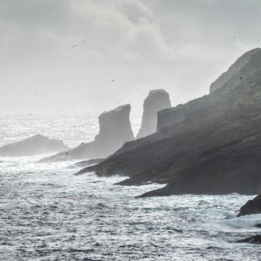 Воздух над скалами Мичинеса кипит от летающих тупиков и олуш Air boils with flying puffins and gannets over the cliffs of Mykines