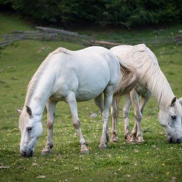 Лошади в Сванетии свободно пасутся в долинах и горах Horses graze freely in Svaneti's valleys and mountains