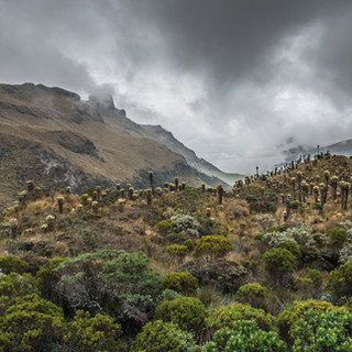 Пáрамо (влажные высокогорные луга) в Андах Páramo (high montane vegetation ecosystem) in the Andes