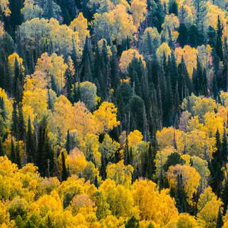 Осенний лес на горном склоне Autumn-colored forest on a mountain slope