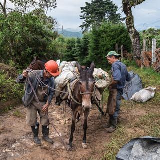 Во многих сельских горных районах Колумбии лошади до сих пор – главный грузовой транспорт In rural mountaneous areas of Colombia, horses are still the main means for transporting goods