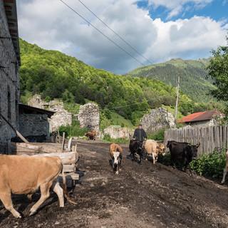 Обычная уличная сцена в обычной сванской деревне Usual street scene in a usual Svaneti village