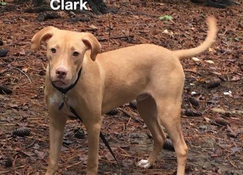 clarke2.jpg