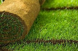 Lawn-5-1.jpg