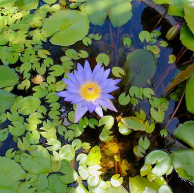 nature-blossom-plant-leaf-flower-purple-