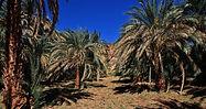 oasis-1024x542.jpeg