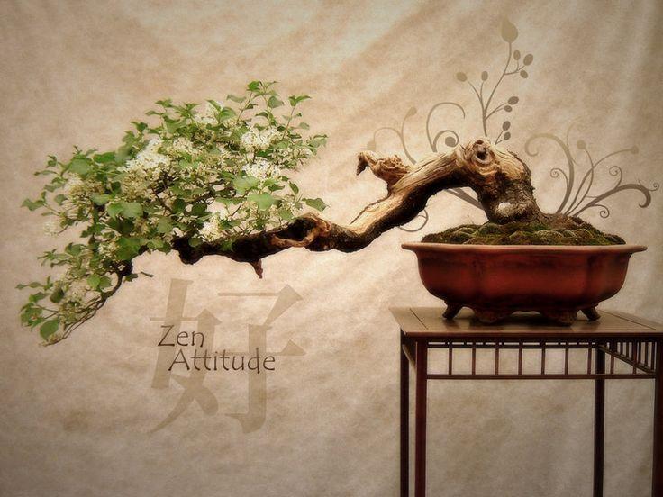 esprit zen zeny boutique
