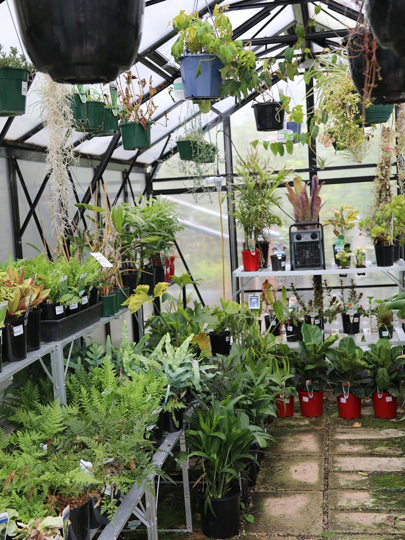 The Garden Depot – Indoor Plants
