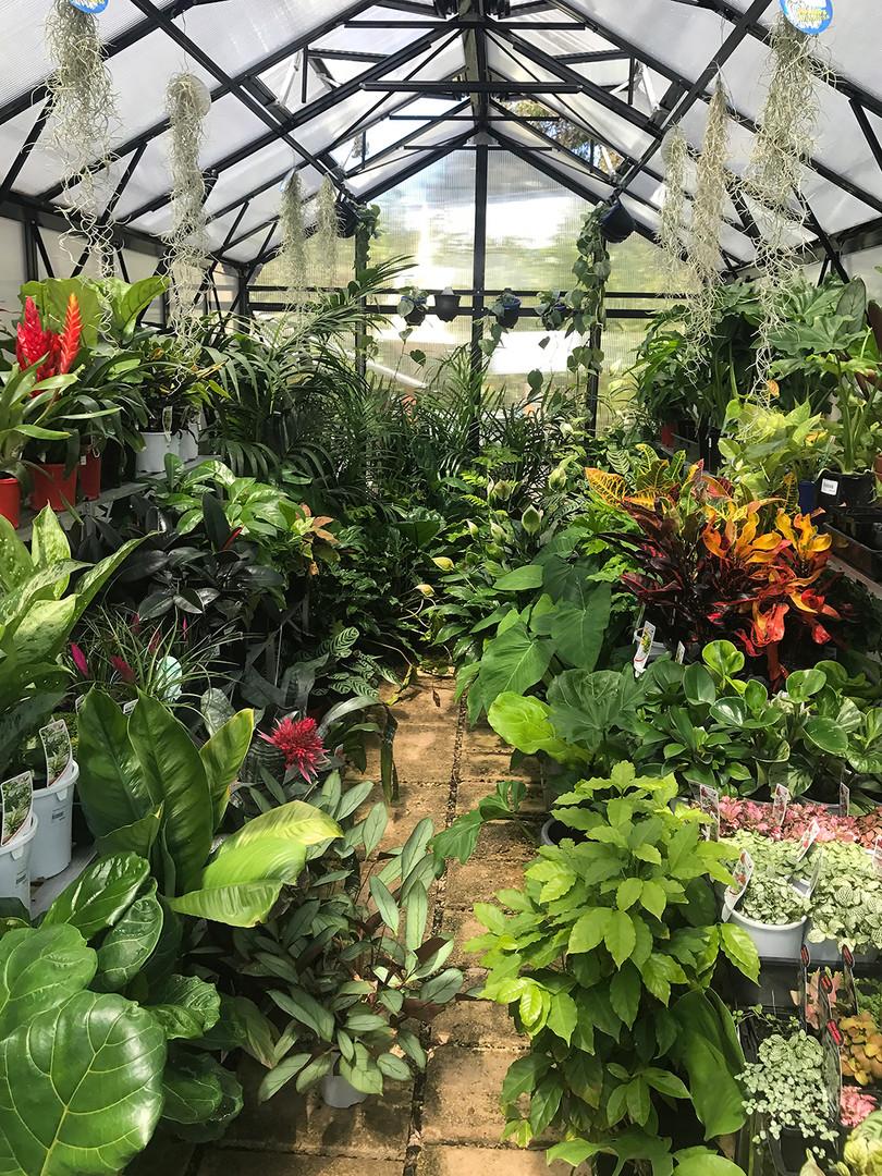 IMG_0177 2.JPGThe Garden Depot – Indoor Plants