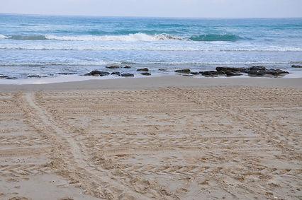 עקבות נקבת צב ים