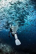 Scubadiving. Matériel de plongée. Palme SEAWING Nova 2 blanche SCUBAPRO. PADI Advanced Diver à Paris. Perfectionnement, Formation, Brevets et Cours à la Carte en piscine et en Fosse. Vente de livre et manuel PADI
