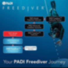 freediver PADI Paris