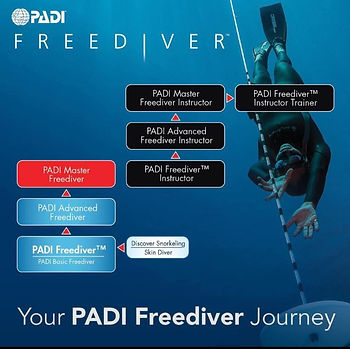 basic freediver pai paris