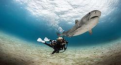 Scubadiving. Landscape diving. SCUBAPRO palme SEAWING Gorilla blanche plongée avec les requins. Remise à niveau, Formation à la carte. Cours et brevets PADI en fosse de plongée 5, 10, 20m, piscine, mer, lac du débutant au moniteur. Vente Livre Manuel PADI