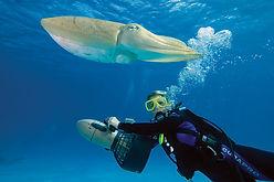 Scubadiving. Sharks. Scooter propulsion plongée PADI. PADI Advanced Diver à Paris. Perfectionnement, Formation, Brevets et Cours à la Carte en piscine et en Fosse. Vente de livre et manuel PADI