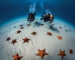 Scuba diving étoile de mer, landscape, SCUBAPRO. Spécialité Profonde Deep, Formation à la carte. Cours et brevets PADI en fosse 5, 10, 20m, piscine, mer, lac du débutant au moniteur. Vente Livre Manuel PADI